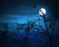 full_moon_____midnight_forest_by_gothrix.jpg